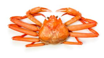 Snøkrabbe har blitt en vinner i frysedisken i amerikanske dagligvarebutikker. Foto: seafood.no