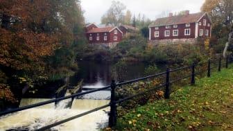 Den historiska dammen vid Järle kvarn är en omstridd plats där natur- och kulturvärden ställs mot varandra. Foto: Helena Törnqvist.