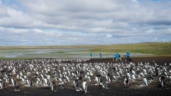 Antarctica_Illustration-Photo_BluffCove©Dominic-Barrington