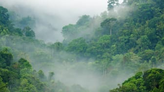 At bevare vilde og urørte skove i Danmark og resten af verden vil modvirke både klima- og biodiversitetskrisen. Foto:: Shutterstock