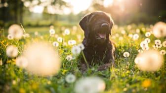 Här är tipsen för dig som vill svemestra med hund!