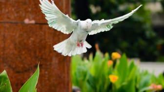 Håll fåglarna på avstånd i din trädgård!
