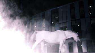 Helsingborg Horse Week