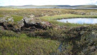 Kollapsande torvmark när permafrost tinar, Tavvavuoma i norra Sverige. Foto: Britta Sannel