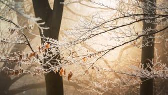Tidig vinter höjer elpriset