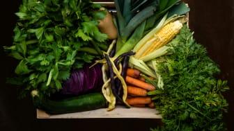 Höstsäsongens frukter och grönsaker