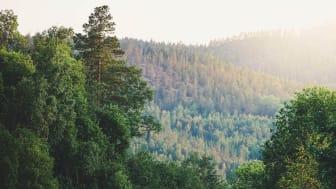 Kraftigt stigande pris på skogsmark när Ludvig & Co summerar 2020 års försäljningar
