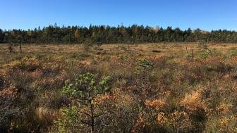 Trone mosse. Foto: Länsstyrelsen i Västra Götaland