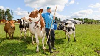 Hällforsin tilan maidontuottaja Crista Hällfors kertoo, että lehmät viihtyvät laitumella etenkin viileinä kesäpäivinä.