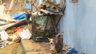 1905-WTG-Odisha-Soforthilfe-Straßenhunde