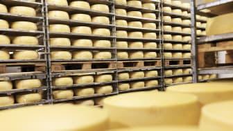 Skånemejeriers hantering av hushållsosten är korrekt, bekräftar Livsmedelsverket.