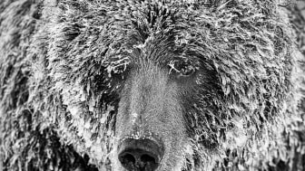 © marko Dimitrijevic, Switzerland, Shortlist, Professional competition, Natural World & Wildlife, 2020 SWPA