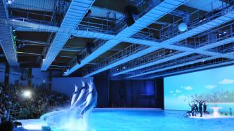 Delfinshow på Kolmårdens delfinarium. Foto: Djurrättsalliansen