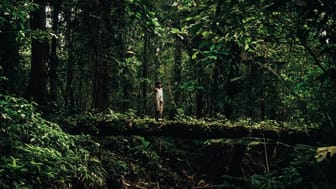 Oprindelige folk er en vigtig medspiller til at passe på de tilbageværende urskove, da de er mindre tilbøjelige til at ødelægge dem end den udviklede verden