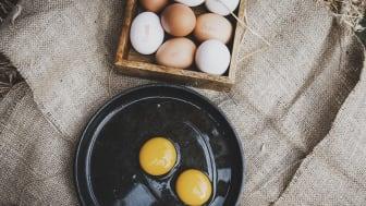 Ägg, som är en utmärkt källa till D-vitamin, har visat sig vara dubbelt så nyttigt mot vad man tidigare trott. Foto: Svenska Ägg
