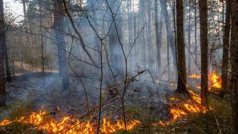 Karlstads kommun ska öva naturvårdsbränning. Bild från Shutterstock.