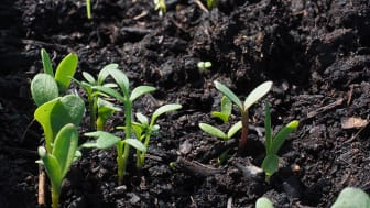 Entreprenöriellt lärande i hållbarhetens tecken