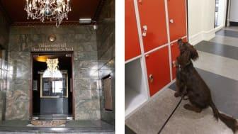 Thoren Business School i Malmö anlitar Watson Detective Dogs för att göra förebyggande hundsök på skolan.