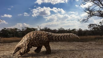 ©  Brent Stirton, South Africa, Category Winner, Professional competition, Natural World & Wildlife, 2020 SWPA