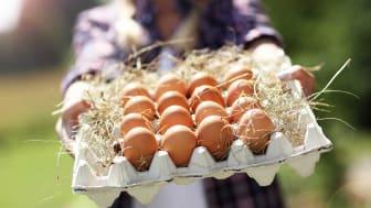 I de nye kriteriene ligger det bl.a. at Orklas selskaper skal produsere med egg fra burfrie høns.