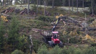 Dagens skogsbruk är en het fråga. Foto: Mostphotos