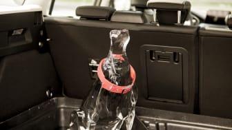 Smeltet ishund i varm bil