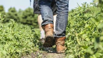 SydGrönt fokuserar på att konsumenten ska komma närmare odlarna och deras verklighet.