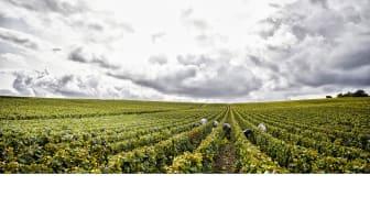 Henriot vineyards.jpg