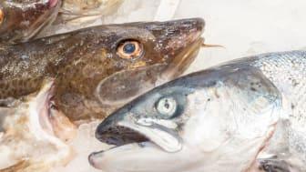 Spanjoler er tradisjonelle fiskekjøpere. De foretrekker ferskfiskdisken og vil helst se hele fisken før de kjøper den