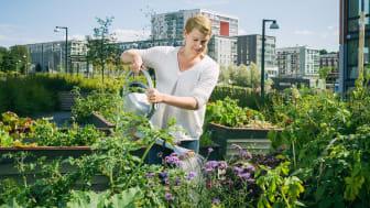 Bostadsrättsföreningarna planterar för ökad hållbarhet som aldrig förr
