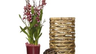 Vinröd glaskruka, dekorativ julkula och ljuslykta i korg
