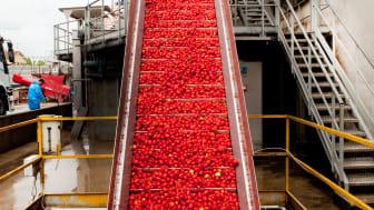 Italienska tomater