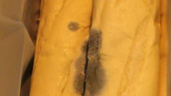 SE 18.16 Mouldy bread image 2