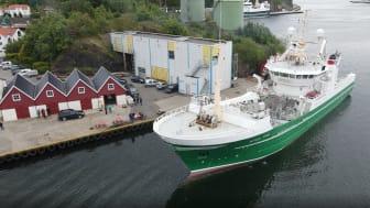 Dagens fangst med Nordsjøsild