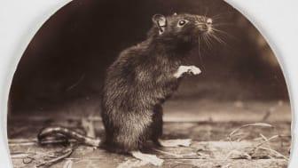 Agent Tesla, remote access trojan RAT