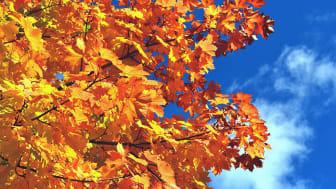 So schön es am Baum auch ist, kann das Herbstlaub am Boden Probleme bereiten.  Foto: Andreas Hermsdorf / pixelio.de