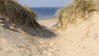 Ta vägen till 45 km strand i Halmstad. Foto: Destination Halmstad