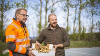 Leif och sonen Johan Svensson skördade idag den allra första färskpotatisen.
