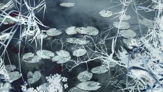 Santeri Tuori: Water Lilies #9, 2020, pigmenttivedos. Yksityiskohta teoksesta.