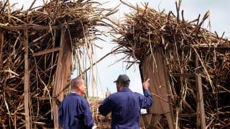 2019-06-13 Bioeconomy Pathways. Workers Discussing Sugar Cane. Photo: Monty Rakusen/GettyImages.