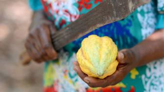 Kakaofrukt och odlare i Ghana. Foto: Fairtrade Sverige