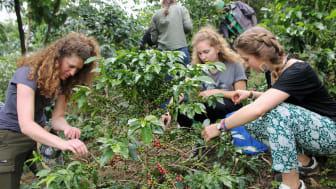 Louisenlunder Ruanda-Gilde