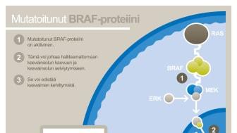 Mutatoitunut BRAF-proteiini