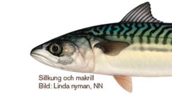 Alla Sveriges fiskar samlade i Nationalnyckeln