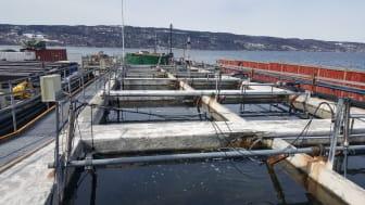 Skal man teste miljøpåvirkninger på økosystemnivå i vann, er mesocosmer (store bassenger) et spesielt velegnet element for undersøkelser under kontrollerbare betingelser.  Bildet er tatt fra NIVAs forskningsstasjon Solbergstrand. (Foto: NIVA)