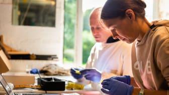 Nordiska bin – en unik resurs för framtidens ekosystemtjänster, är ett av de forskningsprojekt som presenteras under årets ForskarFredag.