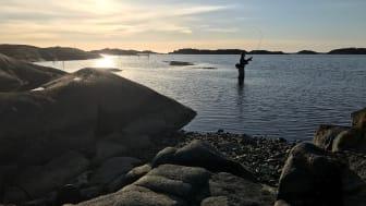 Foto: Gustav Enhol Blomqvist /Havs- och vattenmyndigheten.