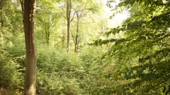 SAUBER ENERGIE startet 2019 den SAUBER-Waldpreis.