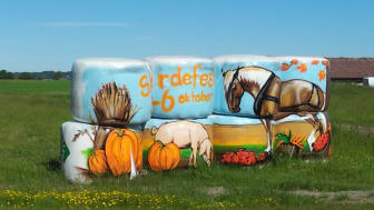 Höbalarna målas inför skördefesten - pressinbjudan