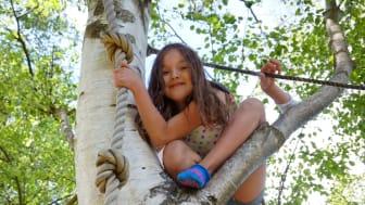 I scoutgårdens klätterträd